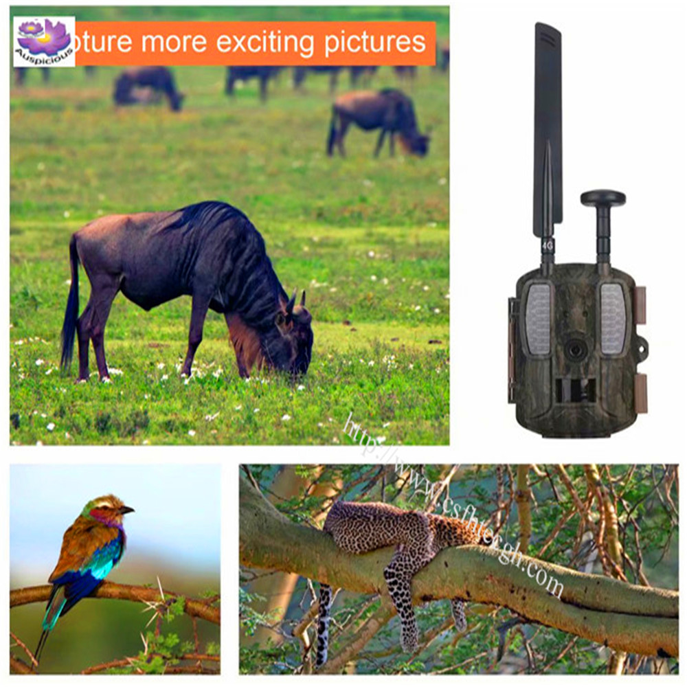 2019 Popular New Full 1080P 4G Sale Motion Sensor Outdoor Waterproof Wildlife Digital Hunting Scouting Trail Mini Wirelesss Camera Made In China